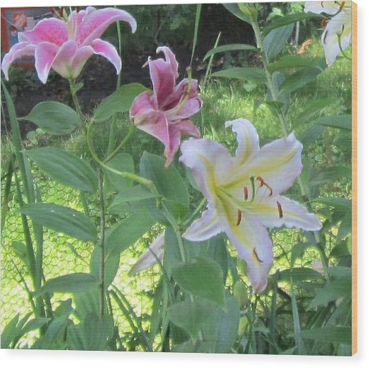 Pink And White Stargazer Lilies Wood Print