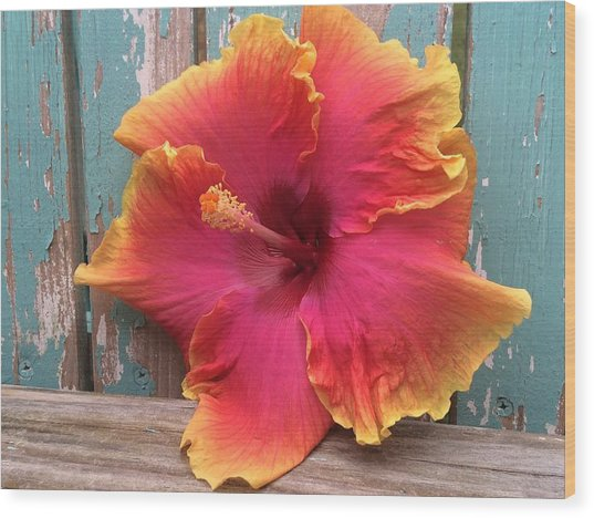 Tropical Pink And Yellow Hibiscus  Wood Print