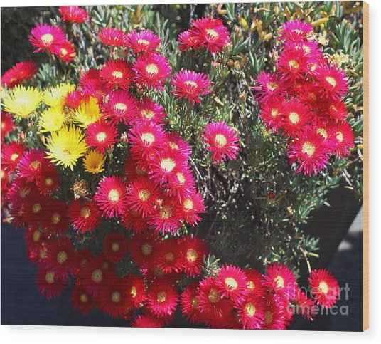 Pink And Yellow Wildflowers Wood Print