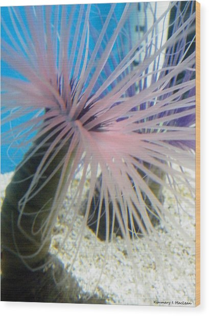Pink Anemone Wood Print