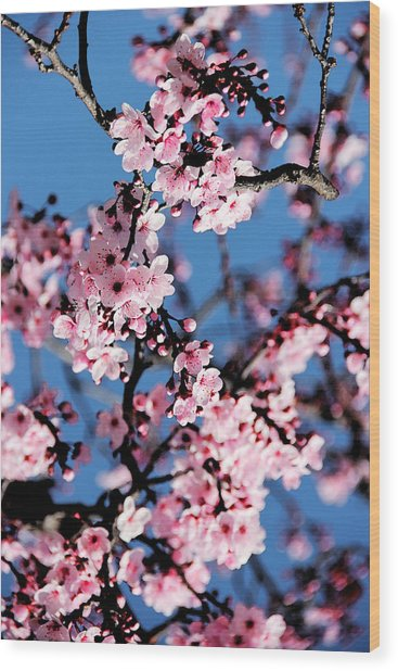 Pink Blossoms On The Tree Wood Print