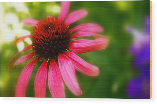 Pink Burst Of Color Wood Print by Alexandra  Rampolla