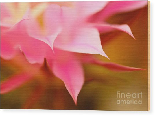 Pink Cactus Flower Abstract Wood Print