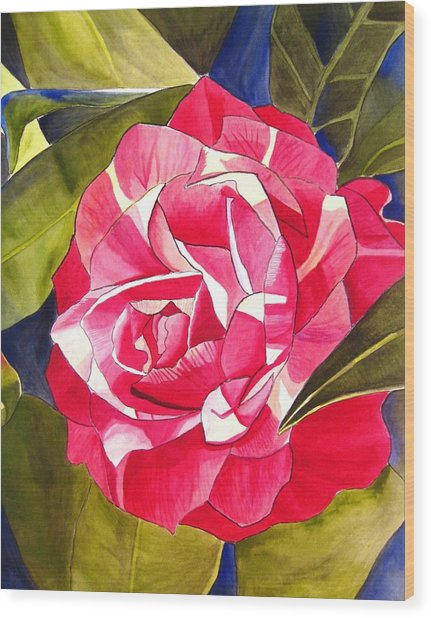Pink Camellia Wood Print by Sacha Grossel