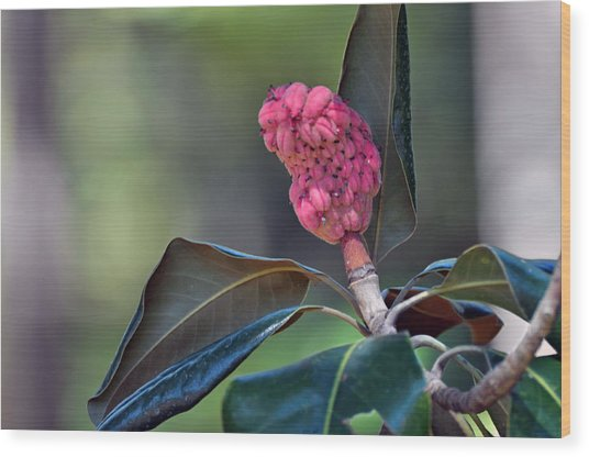 Pink Candle Wood Print by Judith Russell-Tooth