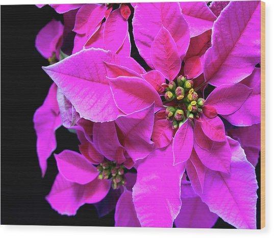Pink Christmas Wood Print