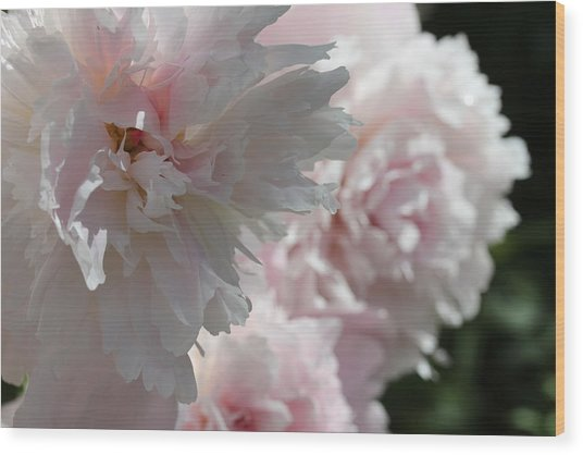Wood Print featuring the photograph Pink Confection by Ruth Kamenev