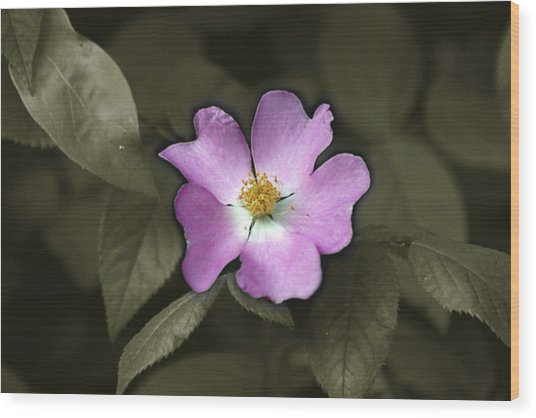 Prairie Rose Wood Print