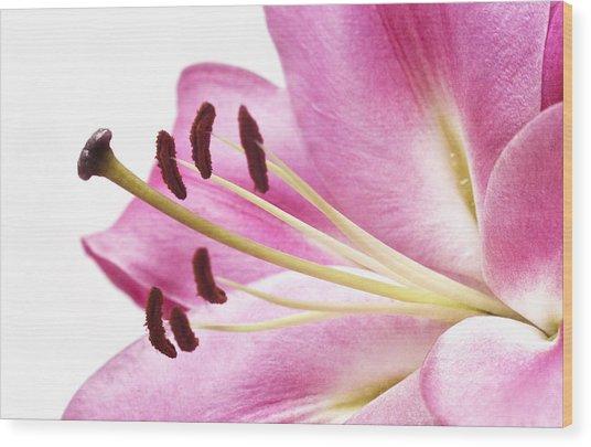 Pink Curves Wood Print