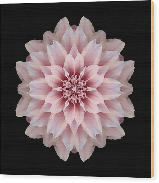 Pink Dahlia Flower Mandala Wood Print