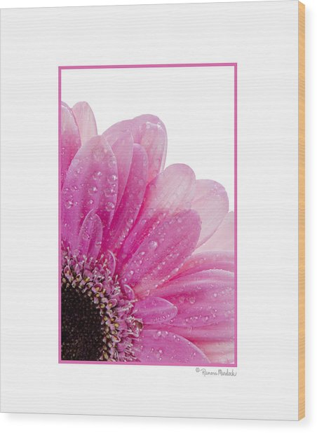 Pink Daisy Petals Wood Print