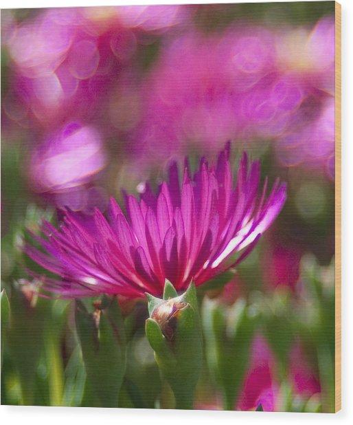 Pink Dance Wood Print