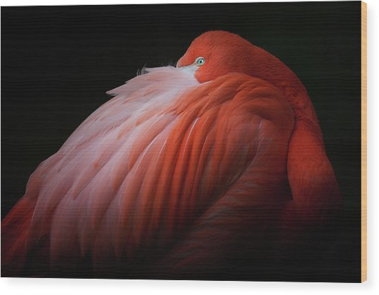 Pink Flamingo Wood Print by Billy Currie Photography