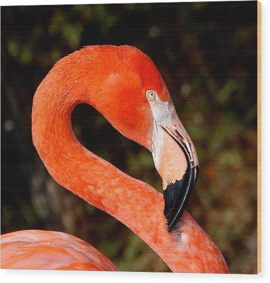 Not So Pink Flamingo Wood Print