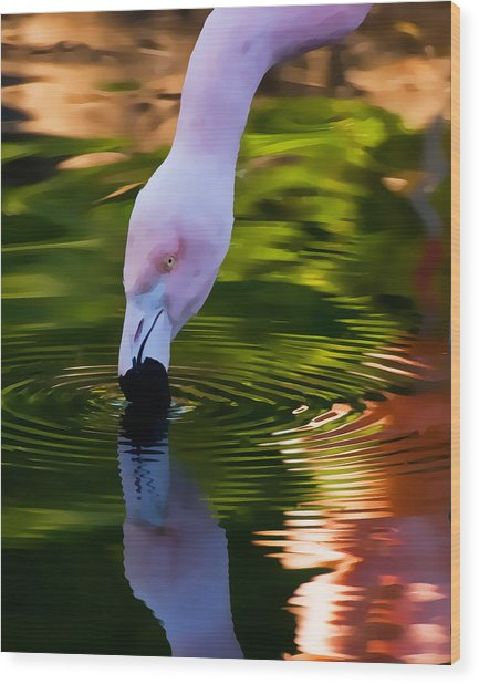 Pink Flamingo Reflection Wood Print