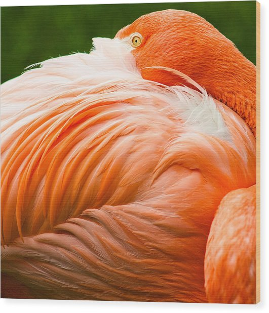 Pink Flamingo Wood Print by Viacheslav Savitskiy