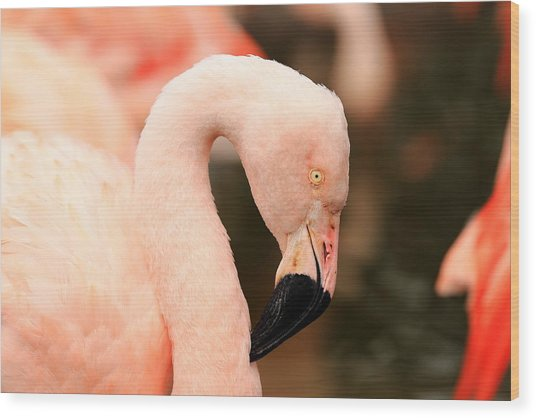 Pink Flamingos Wood Print