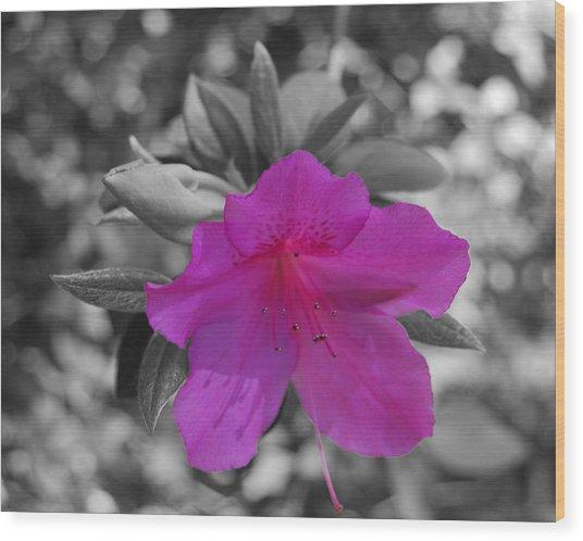 Pink Flower 2 Wood Print