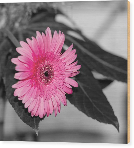 Pink Flower Wood Print by Amr Miqdadi