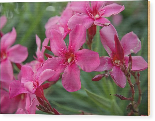 Pink Flowers Wood Print by Dave Dos Santos