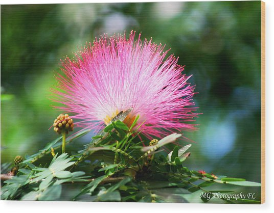 Wood Print featuring the photograph Pink Fluff by Marty Gayler