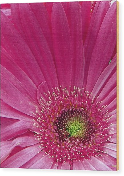 Pink Fusion Wood Print by Sheri McLeroy