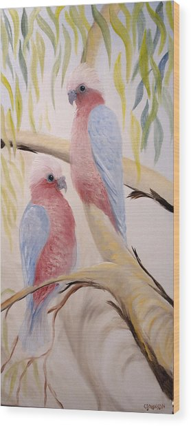 Pink Gallah's Wood Print