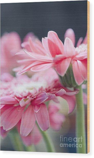 Pink Gerber Daisy - Awakening Wood Print