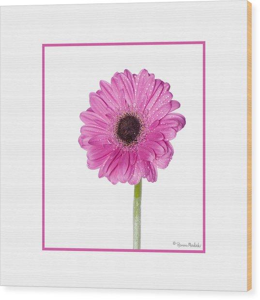 Pink Gerbera Daisy Wood Print
