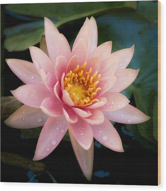 Pink Hawaii Water Lily Wood Print