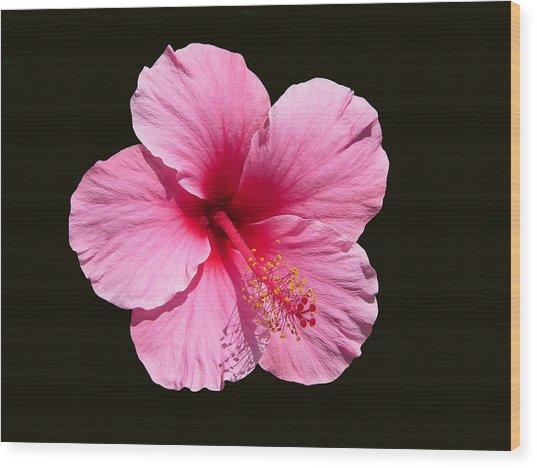 Pink Hibiscus Blossom Wood Print