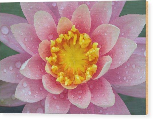 Pink Wood Print by Karen Walzer