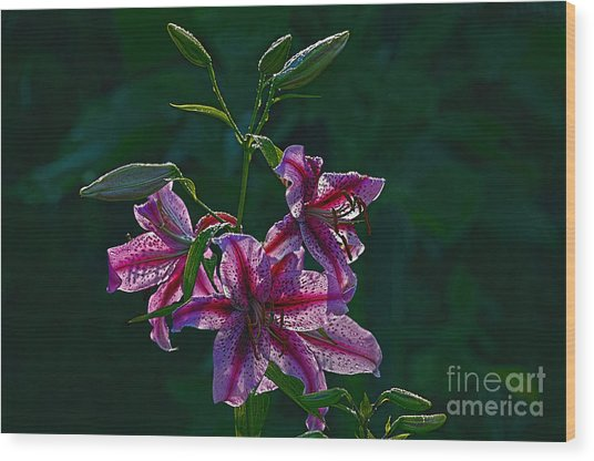 Pink Lilies In The Rain 2 Wood Print by Sharon Talson