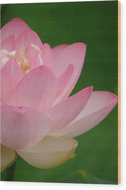 Pink Lotus Wood Print