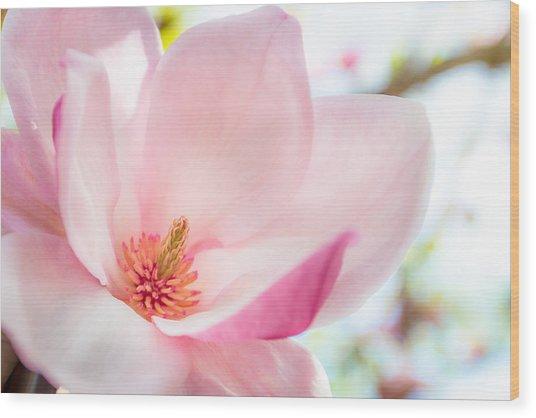 Pink Magnolia Wood Print
