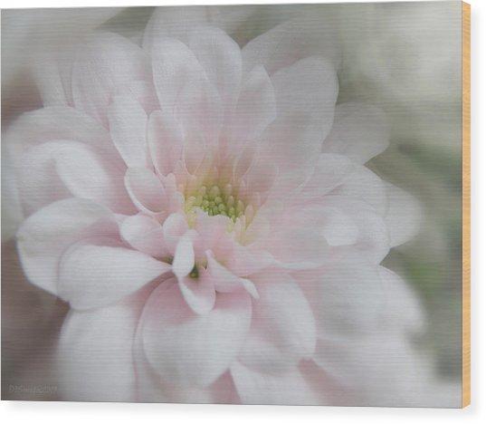 Pink Mum Wood Print