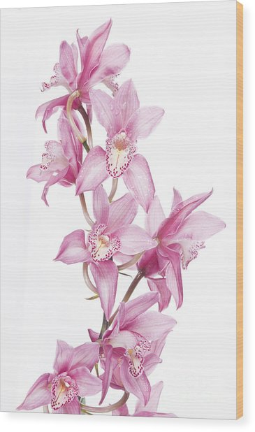 Pink Orchid Wood Print by Boon Mee