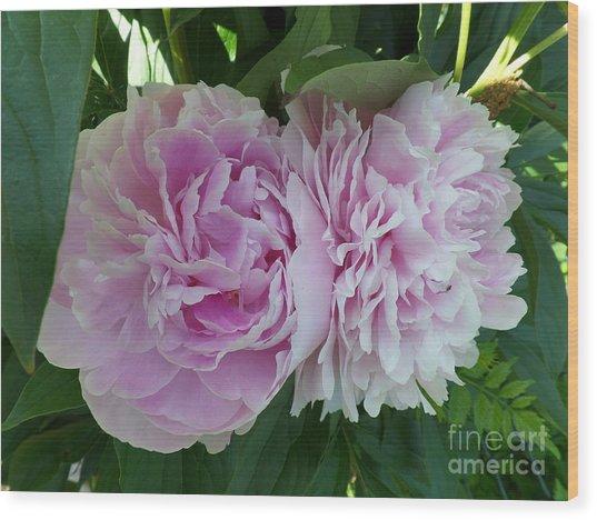 Pink Peonies 2 Wood Print