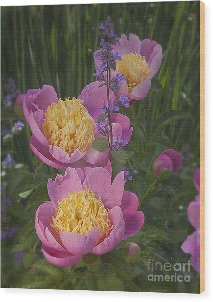 Pink Peonies In My Garden Wood Print by Ann Jacobson