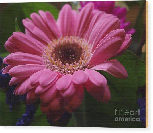 Pink Petal Explosion Wood Print