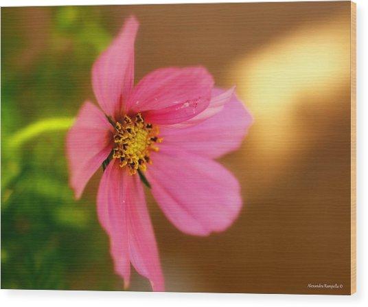 Pink Petals Wood Print by Alexandra  Rampolla