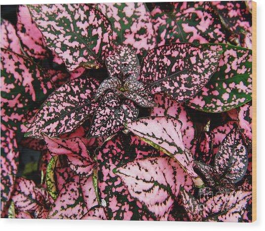 Pink - Plant - Petals Wood Print