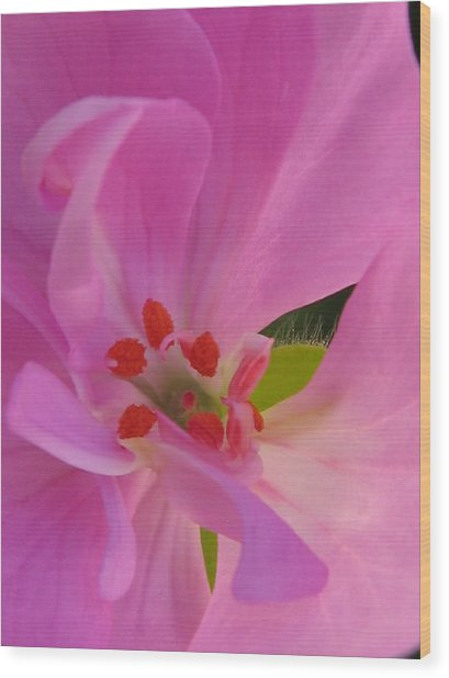 Pink Petals II Wood Print by Tracy Male