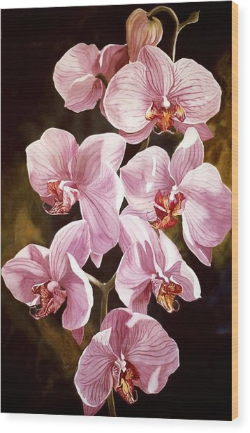 Pink Phalaenopiss Orchids Wood Print