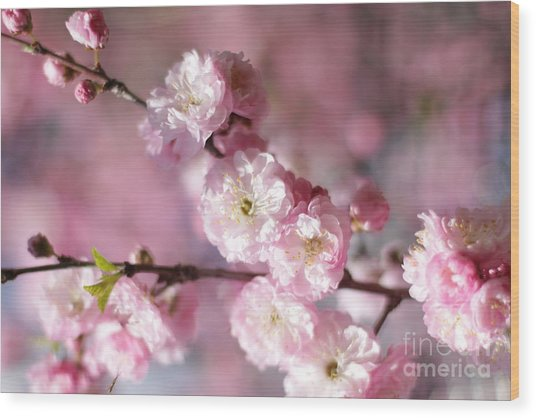 Pink Plum Branch 1 Wood Print