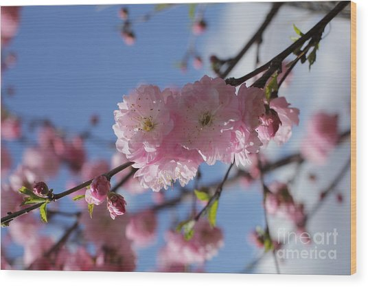 Pink Plum On Sky 2 Wood Print