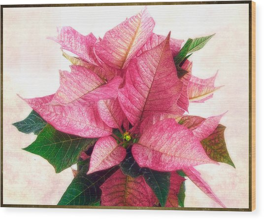 Pink Poinsettia Wood Print
