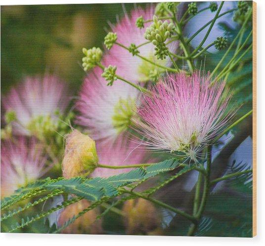 Pink Pom Poms Wood Print