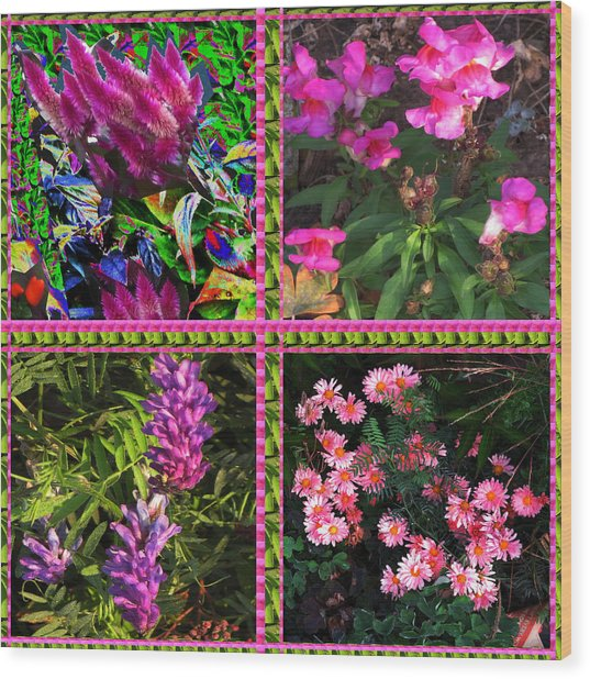 Pink Purple Flowers Captured At The Riverside Ridge At Oakville Ontario Canada Collage Beautiful     Wood Print