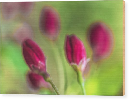 Pink Red Buds Wood Print